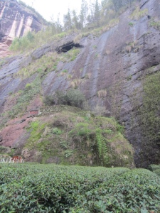 If you look closely, the tea leaves perched on the ledge midway up the cliff are fabled to be the original six Da Hong Pao tea bushes, and are a destination in their own right in the Wuyishan Scenic Area.